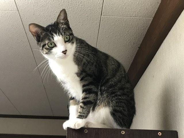 本棚の上にいる猫の画像