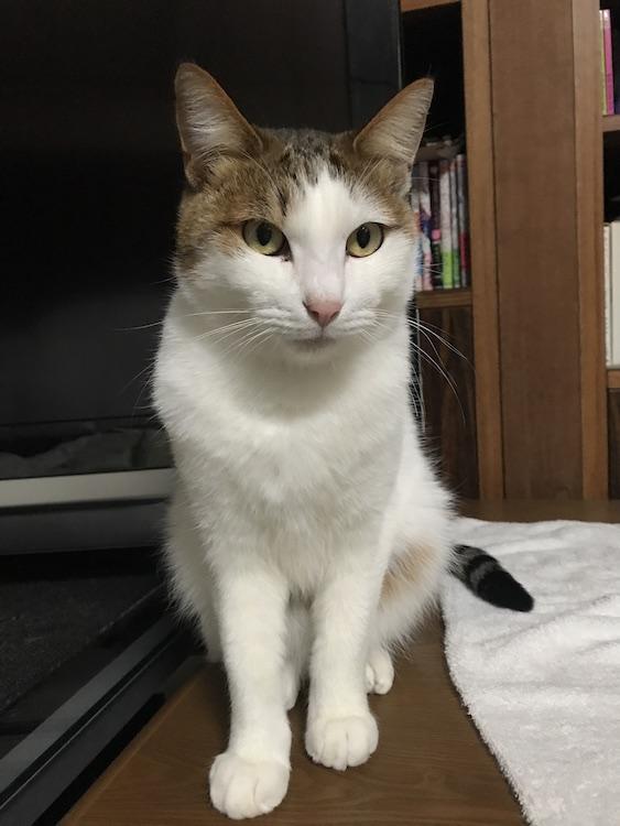 座っている猫の画像