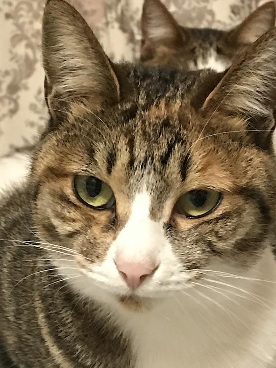猫の顔をアップで撮影した画像
