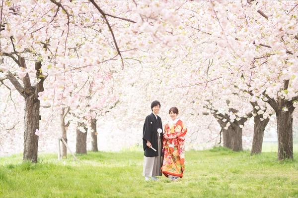 小布施 千曲川河川公園の桜の画像