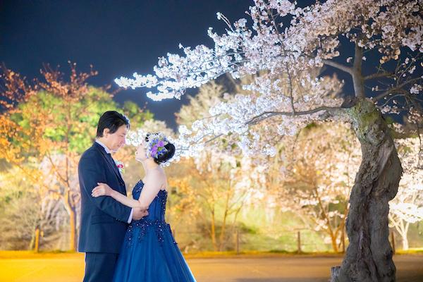 上田城址公園の夜桜の画像