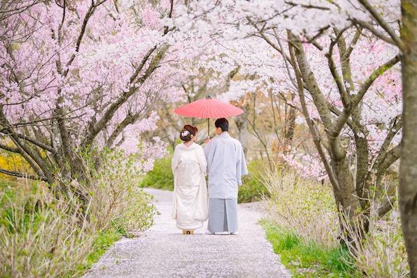 谷巌寺の桜の画像