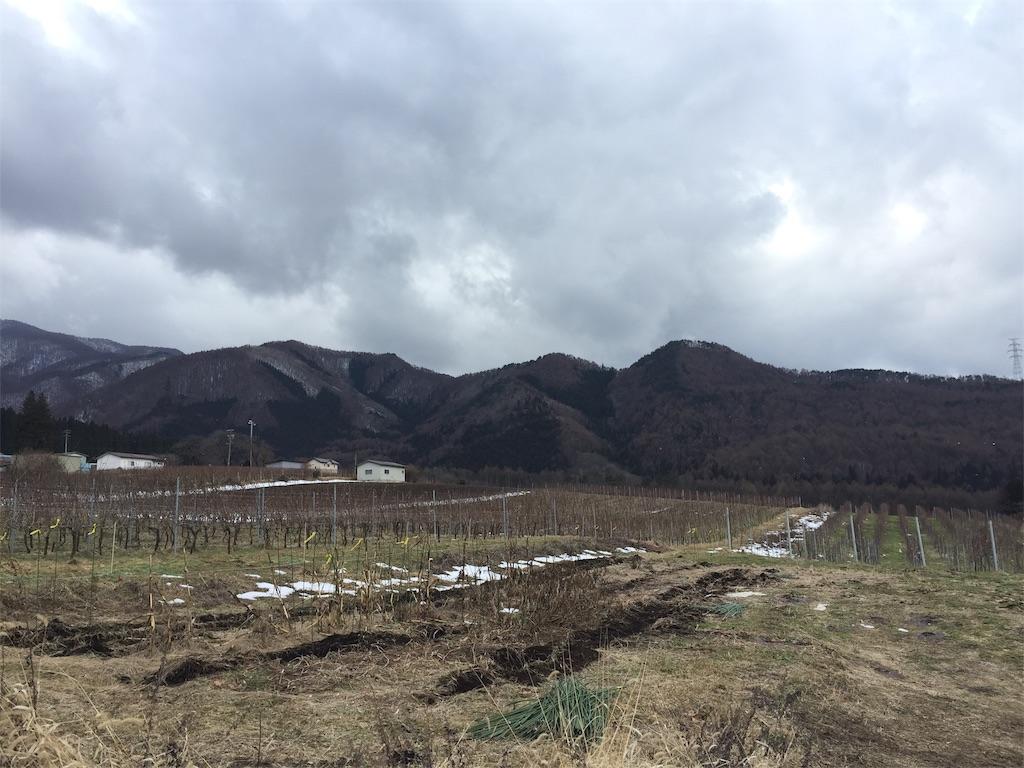 ドメーヌ長谷の畑