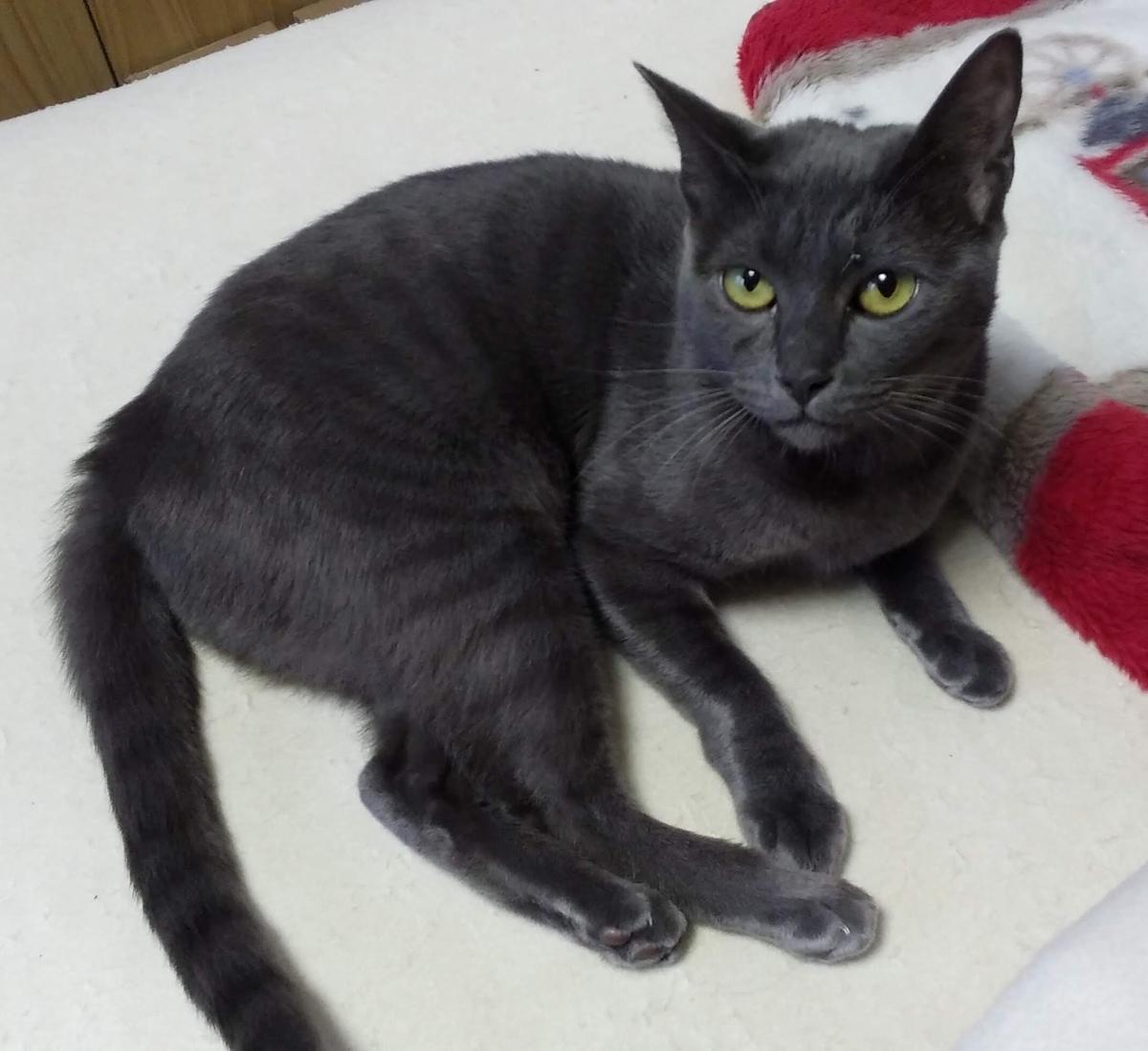 猫 ロン 黒