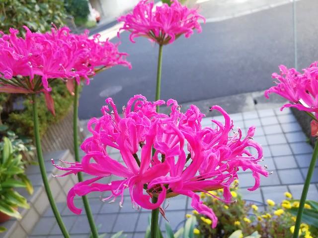 f:id:nagatchi-fm:20201128223929j:image