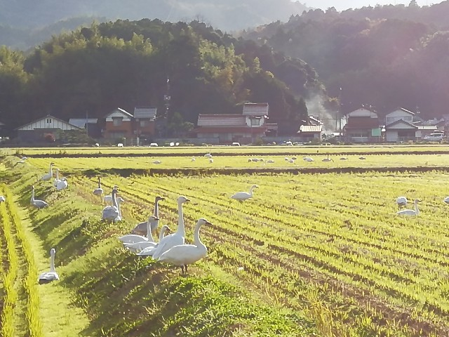 f:id:nagatchi-fm:20201201201210j:image