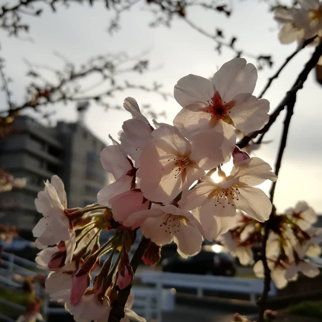 f:id:nagatchi-fm:20210327135150j:image