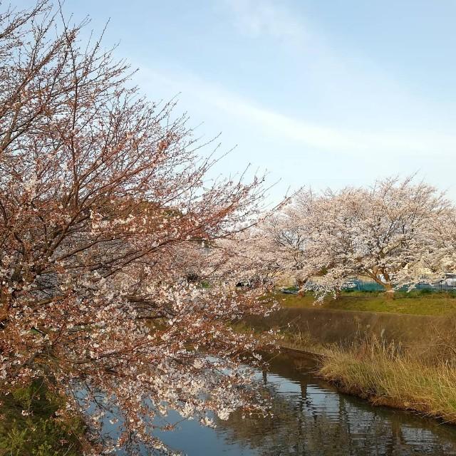 f:id:nagatchi-fm:20210327135302j:image