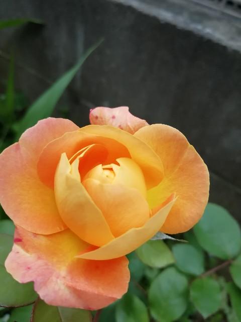 f:id:nagatchi-fm:20210507222223j:image