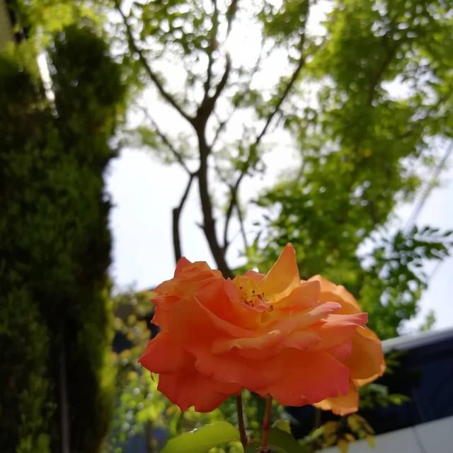 f:id:nagatchi-fm:20210509195106j:image