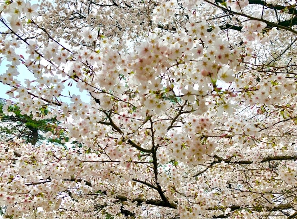 f:id:nagayamaruo:20190330115352j:image