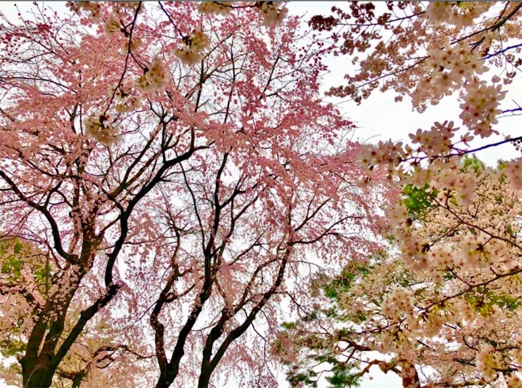 f:id:nagayamaruo:20190330115400j:image