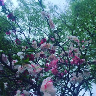 f:id:nagi0_0:20170114211118j:plain