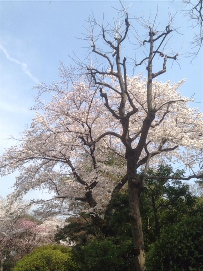 f:id:nagi_narico:20180327202028j:image