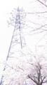 [風景][桜][鉄塔]鉄塔