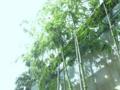 [風景][竹]竹