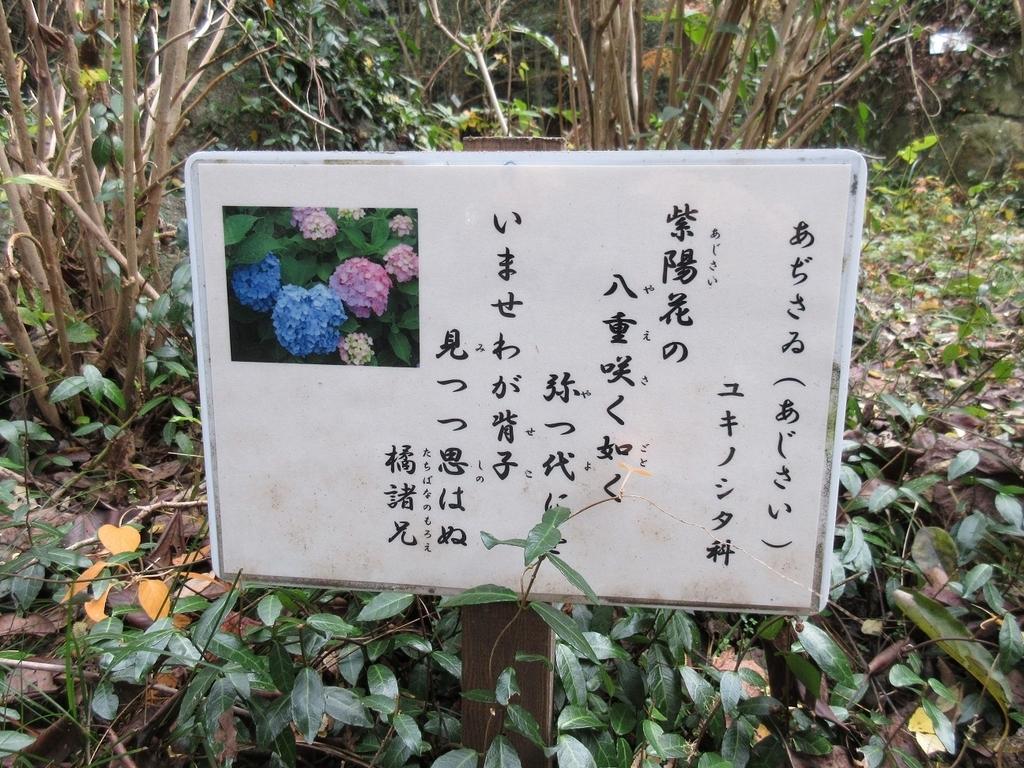 f:id:nagisa777aoi:20181220214618j:plain