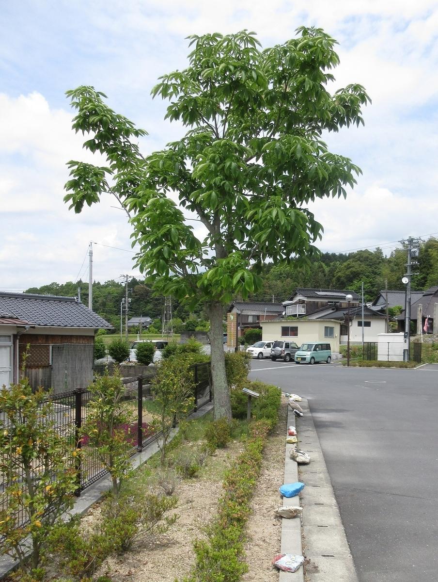f:id:nagisa777aoi:20190610203726j:plain