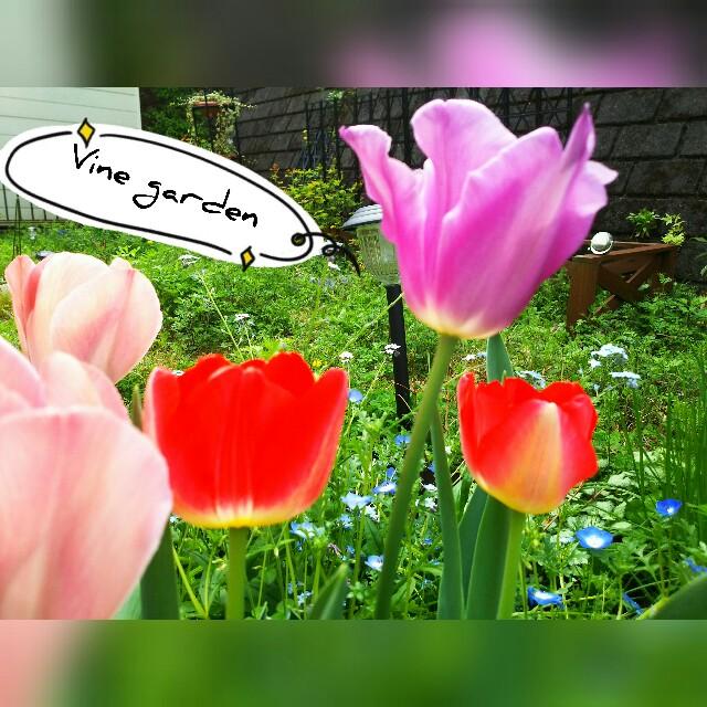 f:id:nagna:20210503073542j:image