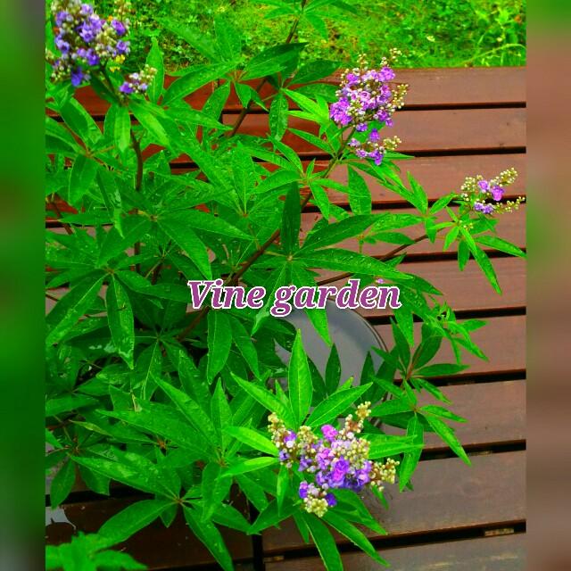 f:id:nagna:20210705013023j:image