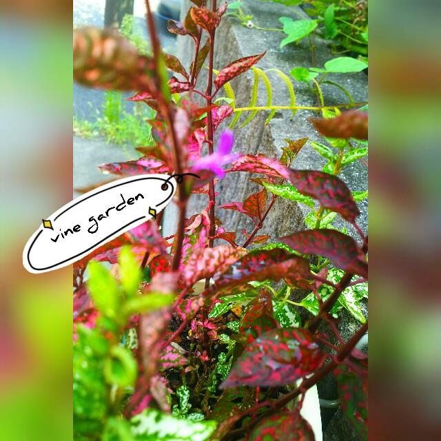 f:id:nagna:20210831092418j:image