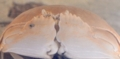 [名護博物館][すなっくスナフキン][沖縄][自然][大浦湾]マルソデカラッパ