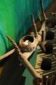 [沖縄][名護博物館][自然][鳥類]企画展_リュウキュウサンショウクイの巣