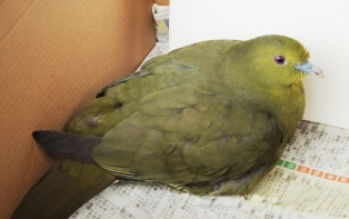 f:id:nagohaku:20120209214657j:image