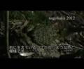 [沖縄][自然][やんばる][両生類]やんばるのカエルなど