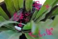 [沖縄][名護][自然][爬虫類]アオカナヘビ卵