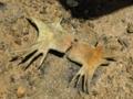 [沖縄][名護][自然][ぶりでぃ子ども博物館]干潟に落ちていたウミガメ骨