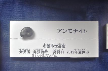 [名護博物館][名護博物館友の会][ギャラリーみんたまぁ][古生物][化石]