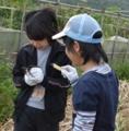 [沖縄][名護][名護博物館][ぶりでぃ子ども博物館][黒糖]