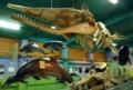 [沖縄][名護博物館][名護][海生ほ乳類]マッコウクジラ骨格