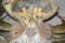 アミメノコギリガザミ