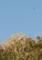 サシバと山頂