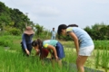 [沖縄][名護][名護博物館][ぶりでぃ子ども博物館][稲作]草とり