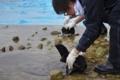 [沖縄][名護][名護博物館][海生ほ乳類]アカボウクジラ掘出
