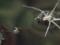 ヒゲナガハシリグモ