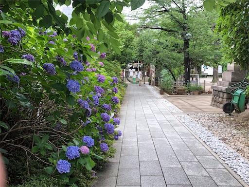 f:id:nagomi0716:20190628082658j:image