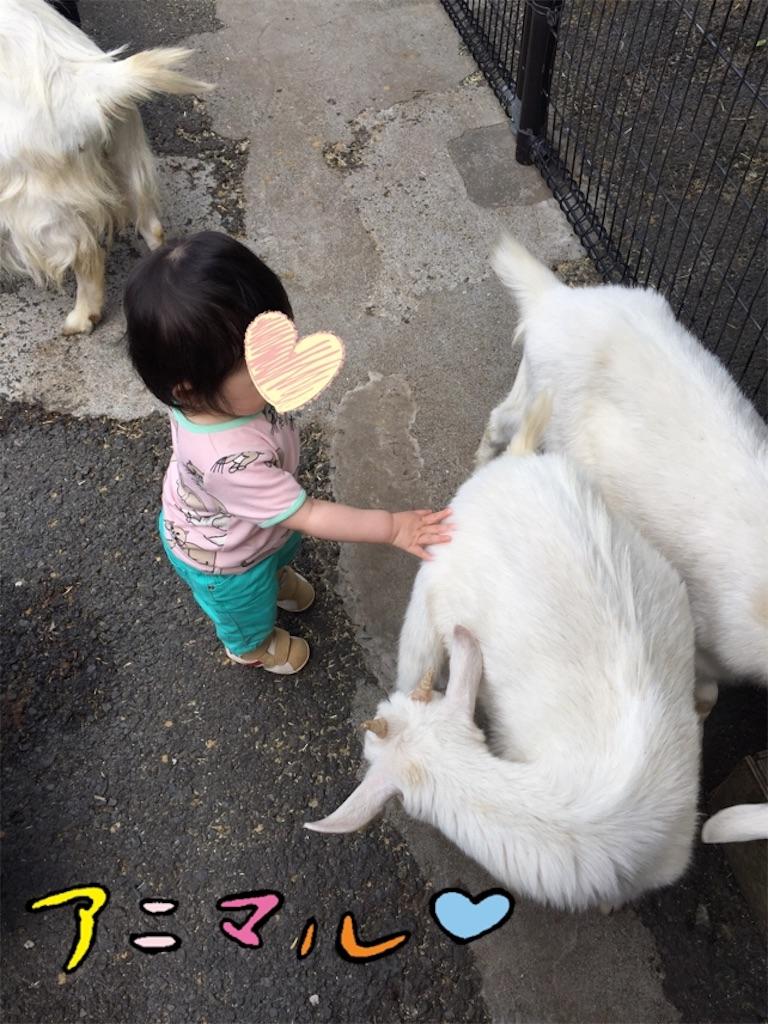 f:id:nagomigaki:20170529130440j:image