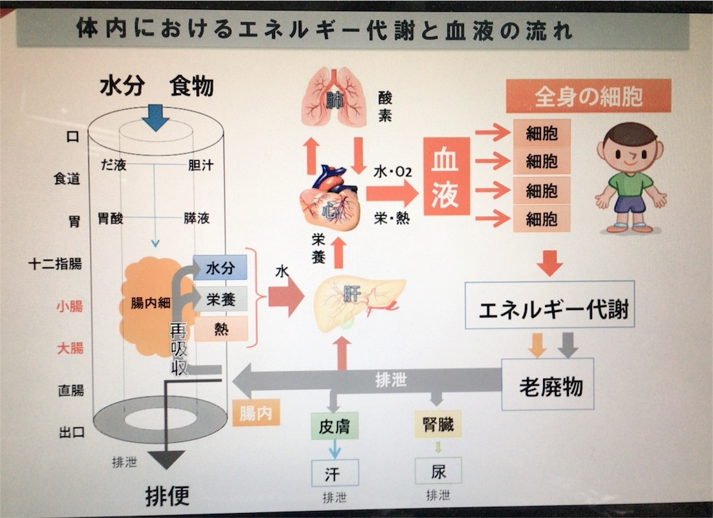 f:id:nagomiyasu-okinawa:20161228002609j:image