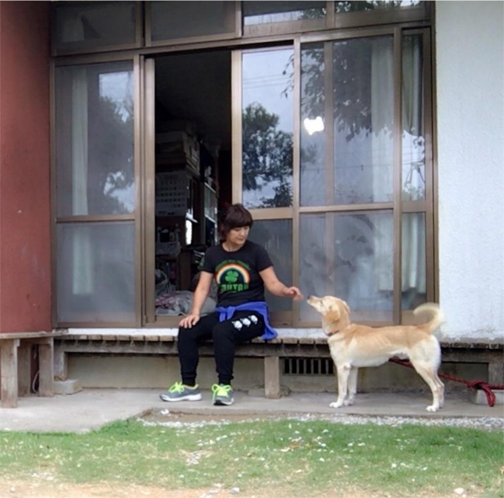 f:id:nagomiyasu-okinawa:20170105160441j:image