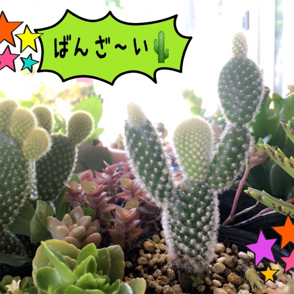 f:id:nagomiyasu-okinawa:20170430103721j:image