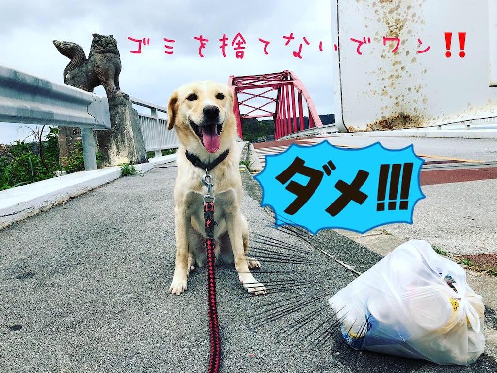 f:id:nagomiyasu-okinawa:20181102110551j:image