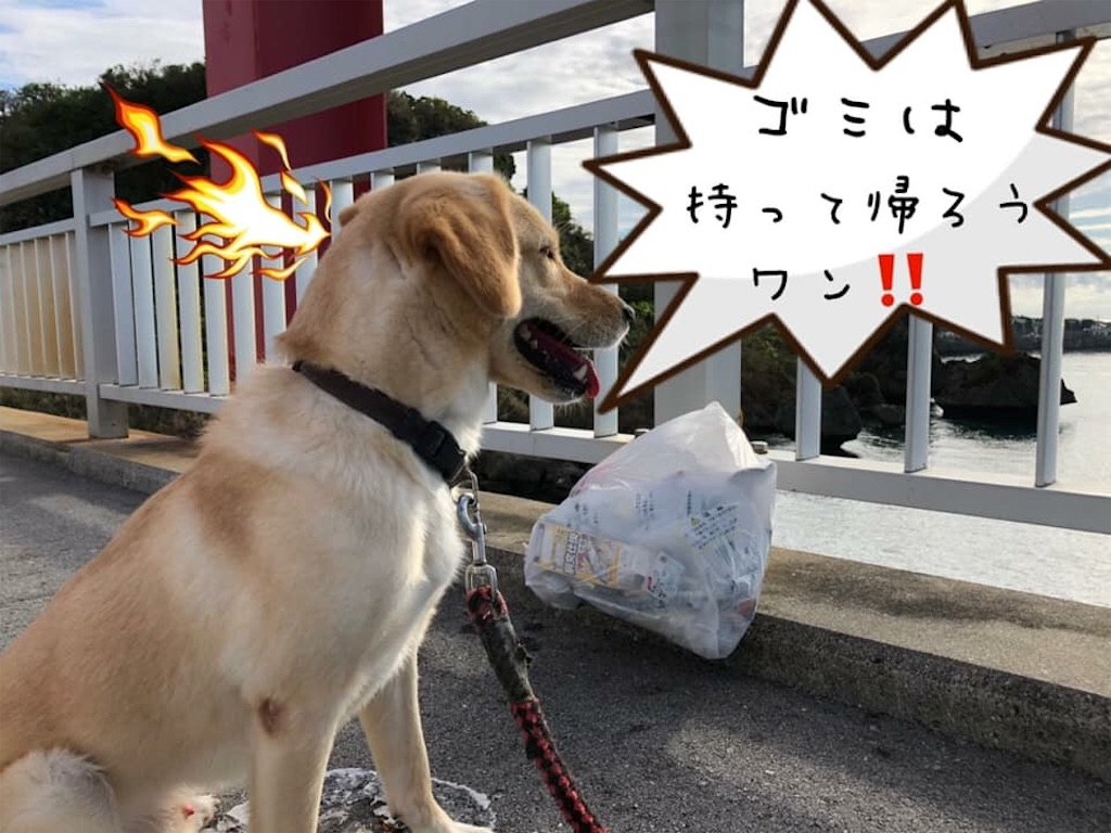 f:id:nagomiyasu-okinawa:20181102110831j:image