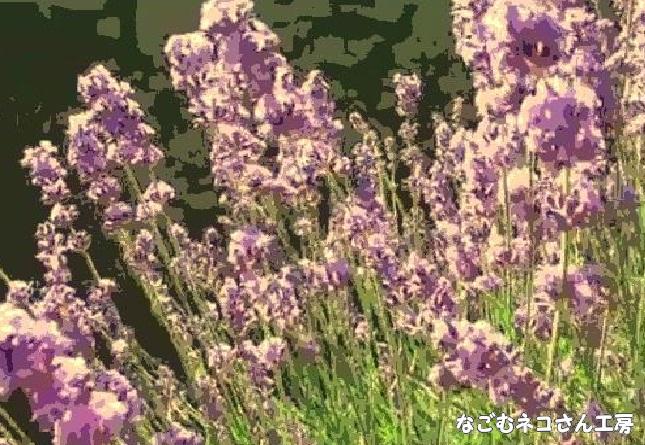 f:id:nagomunekosan_kobo:20210426215256j:plain