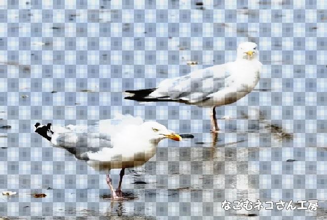 f:id:nagomunekosan_kobo:20210619192524j:plain