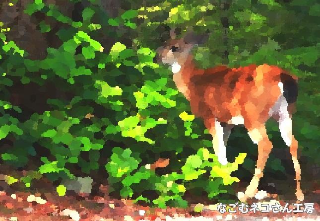 f:id:nagomunekosan_kobo:20210623013600j:plain