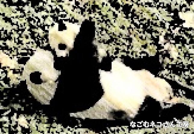f:id:nagomunekosan_kobo:20210706191009j:plain